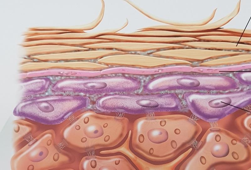 Orthomolekulare Kosmetik – Teil-2